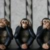 monkeys_evil